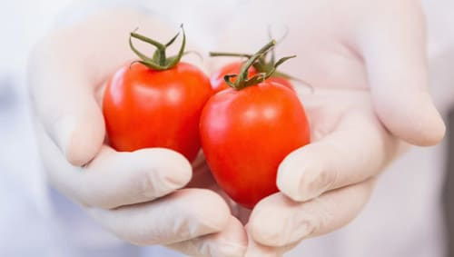 Hands in gloves holding tomatoes